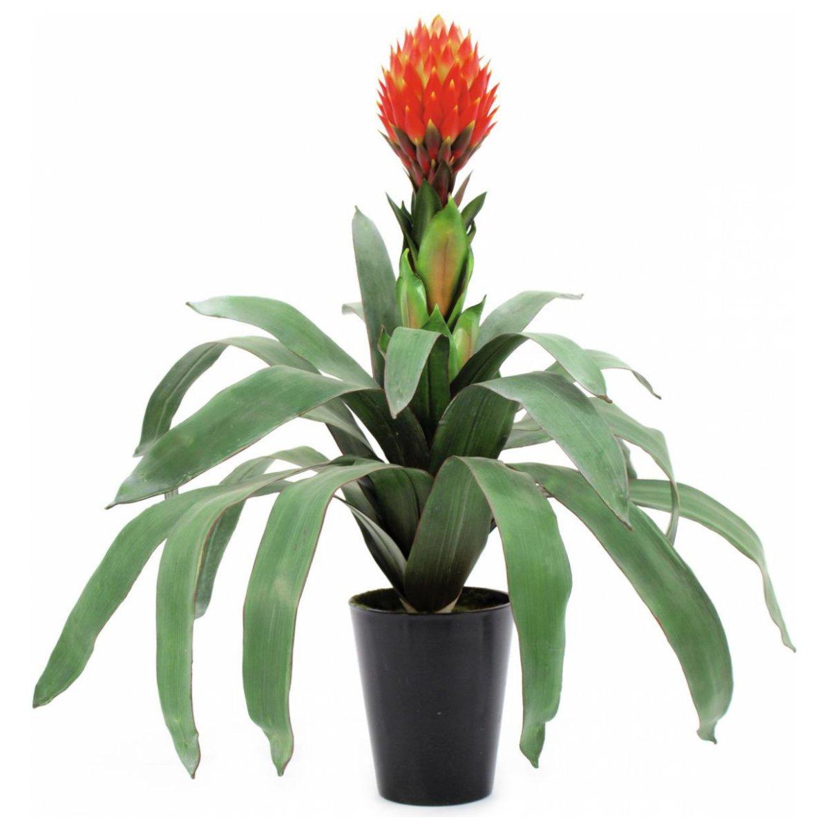 Bromelia Pineapple 68 cm wynajem mebli Magnetic Group Wypozyczalnia Mebli Trojmiasto Gdynia Gdansk Torun Bydgoszcz Ostroda Olsztyn Plock